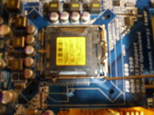 Dsci0059